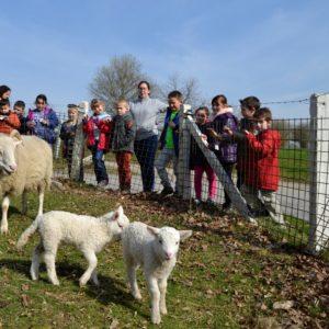 Classes de ferme à Landenne-sur-Meuse – Jour 1